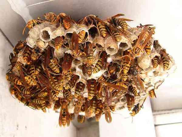 た 病院 蜂 に 行か ない に 刺され